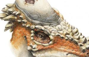 Pachycephalosaurus facts feat (1)