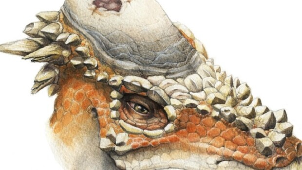 Pachycephalosaurus facts feat (1)