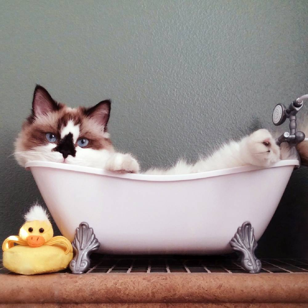 kitten in hot tub adorable