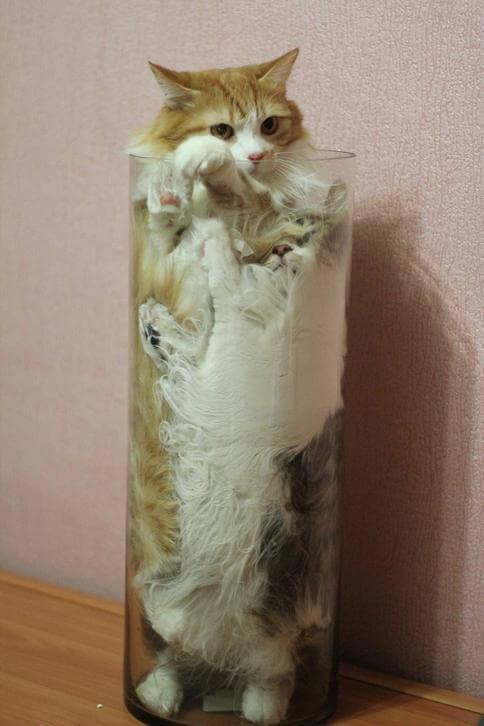 kittens are liquid 19 (1)
