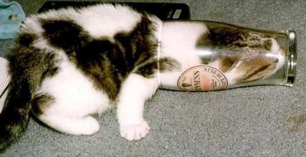 cats are weird 21 (1)