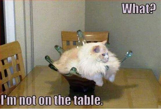 cats are weird 24 (1)