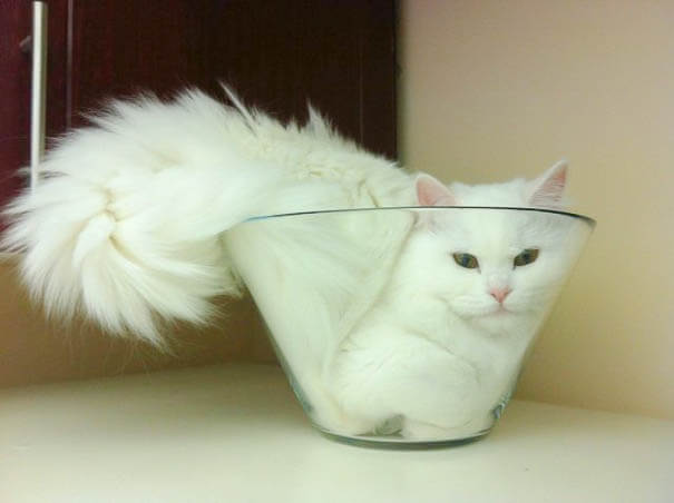 cats are liquid 3 (1)