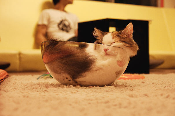 cats are flexible 6 (1)