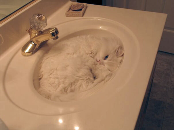 cats are water 9 (1)