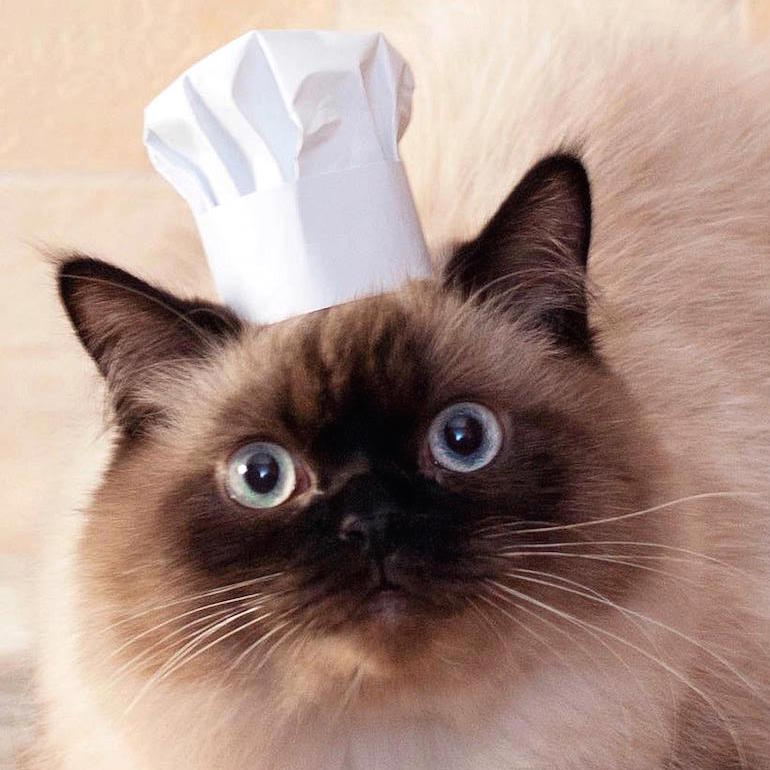 cat wearing chef hat