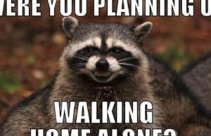 evil plotting raccoon feat (1)