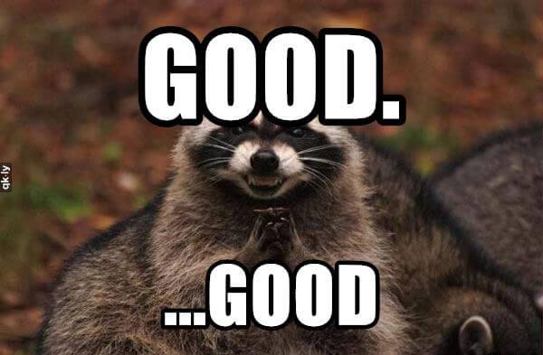 evil raccoon meme 12 (1)