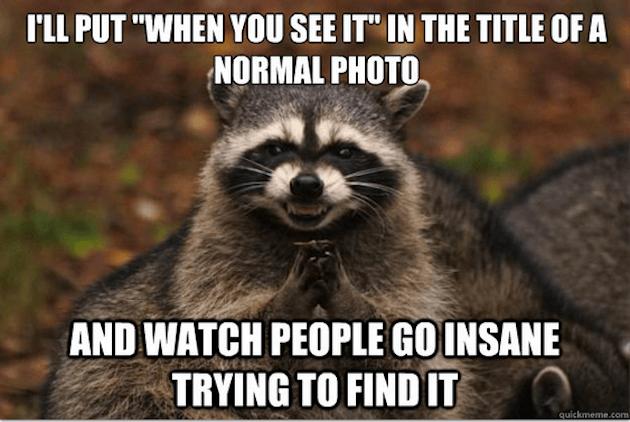 evil raccoon meme 5 (1)