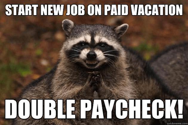 evil raccoon meme 7 (1)