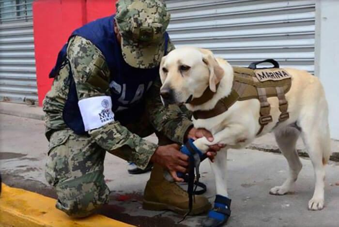 frida rescue dog 2 (1)