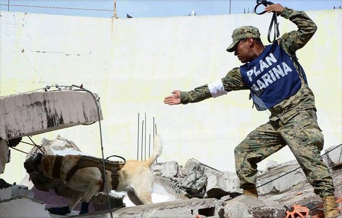 frida rescue dog 3 (1)