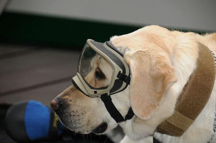 frida rescue dog 4 (1)