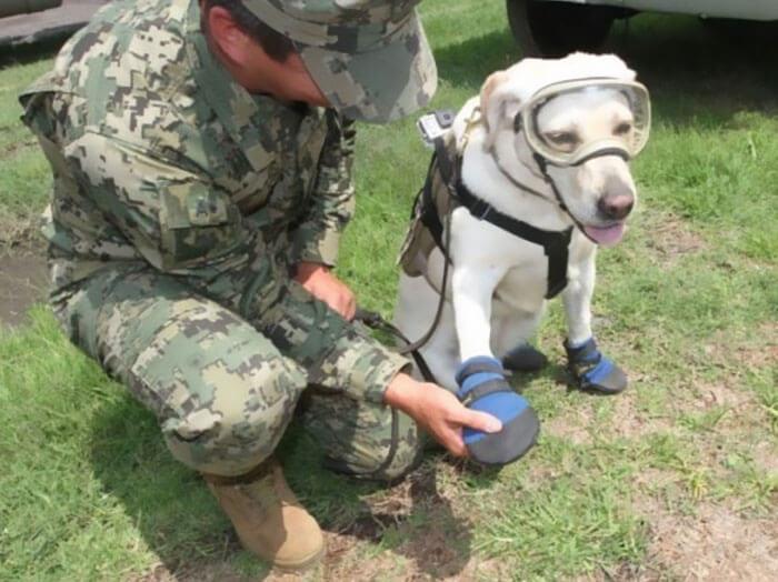 frida rescue dog 5 (1)