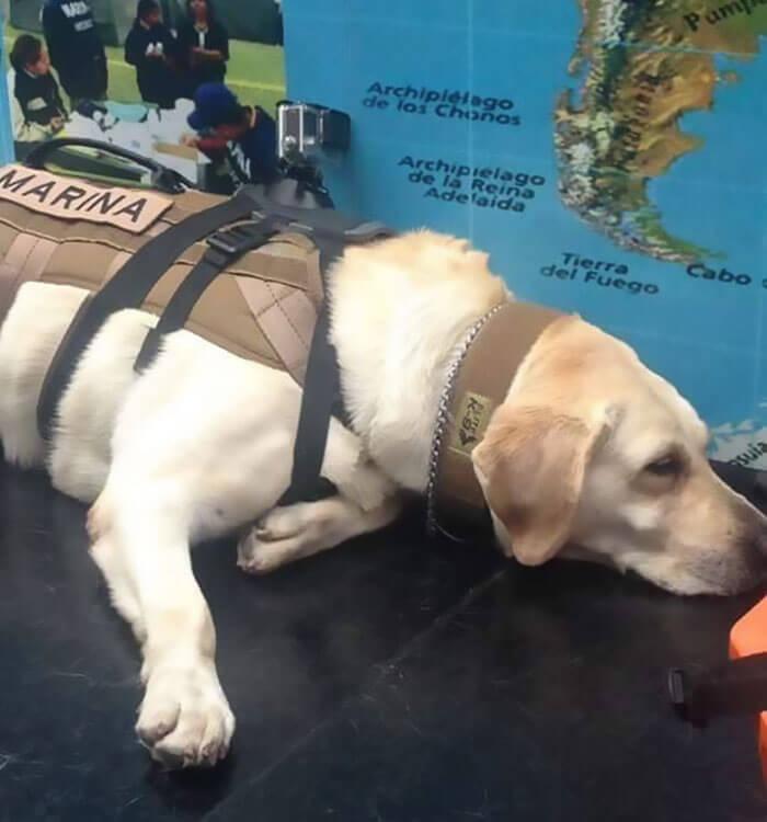 frida rescue dog 8 (1)