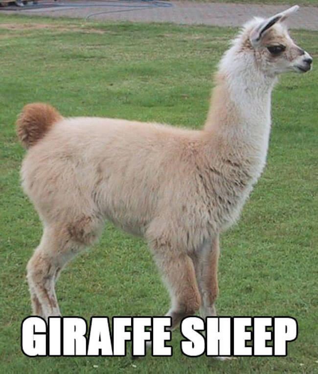 funny animal names
