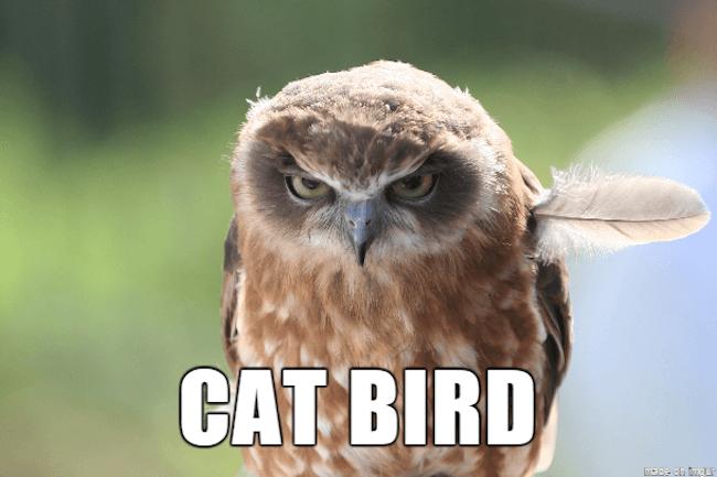 hilarious animal names 10