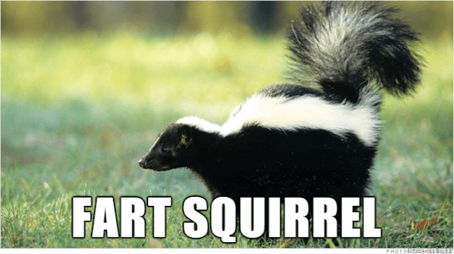 39 Funny Animal Names That Are So Much Better Than The ...
