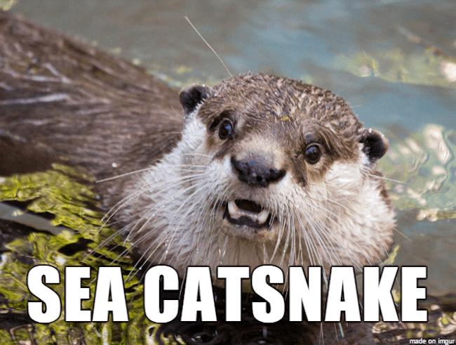 hilarious animal names 12