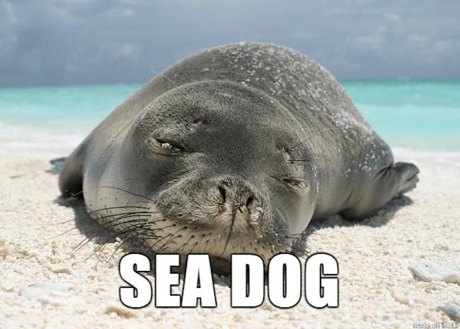 hilarious animal names 13