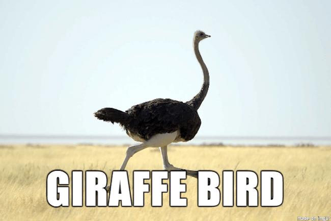stupid animal names 18