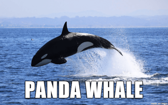 weird animal names 19
