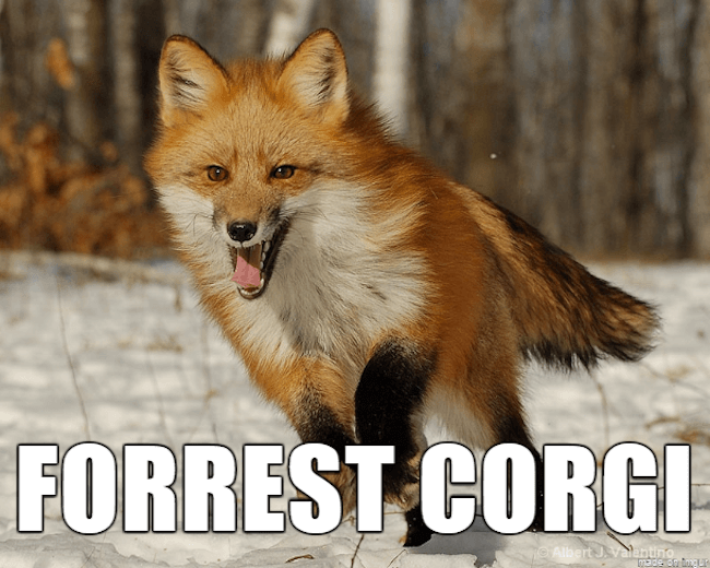 ridiculous animal names 26