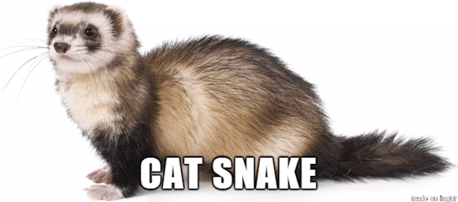 funny animal descriptions 33