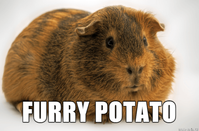 funny animal nicknames 5