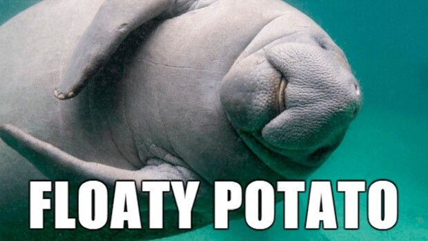 39 Funny Animal Names That Are So Much Better Than The Originals
