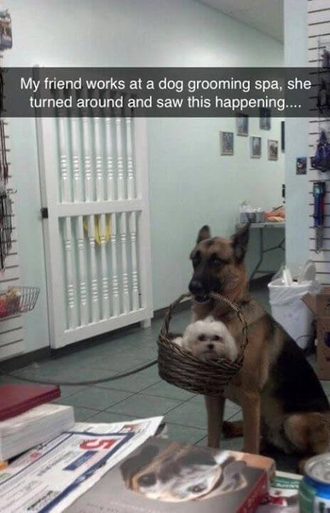 hilarious looking dogs 13 (1)
