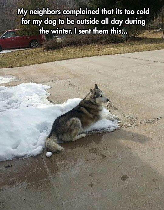 hilarious looking dogs 15 (1)