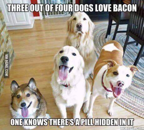 funny looking dogs 27 (1)