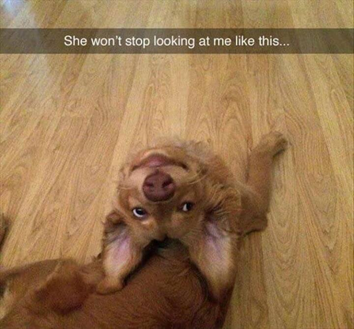 funny looking animals 6 (1)
