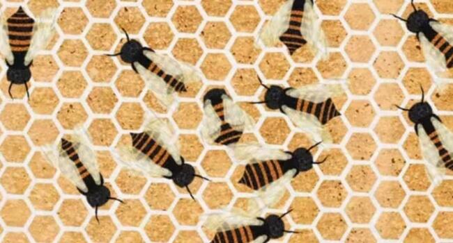 how do bee make honeycombs feat (1)