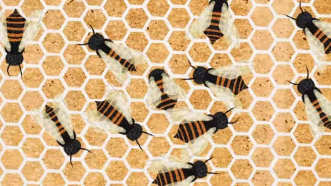 how do bees make honeycombs (1)