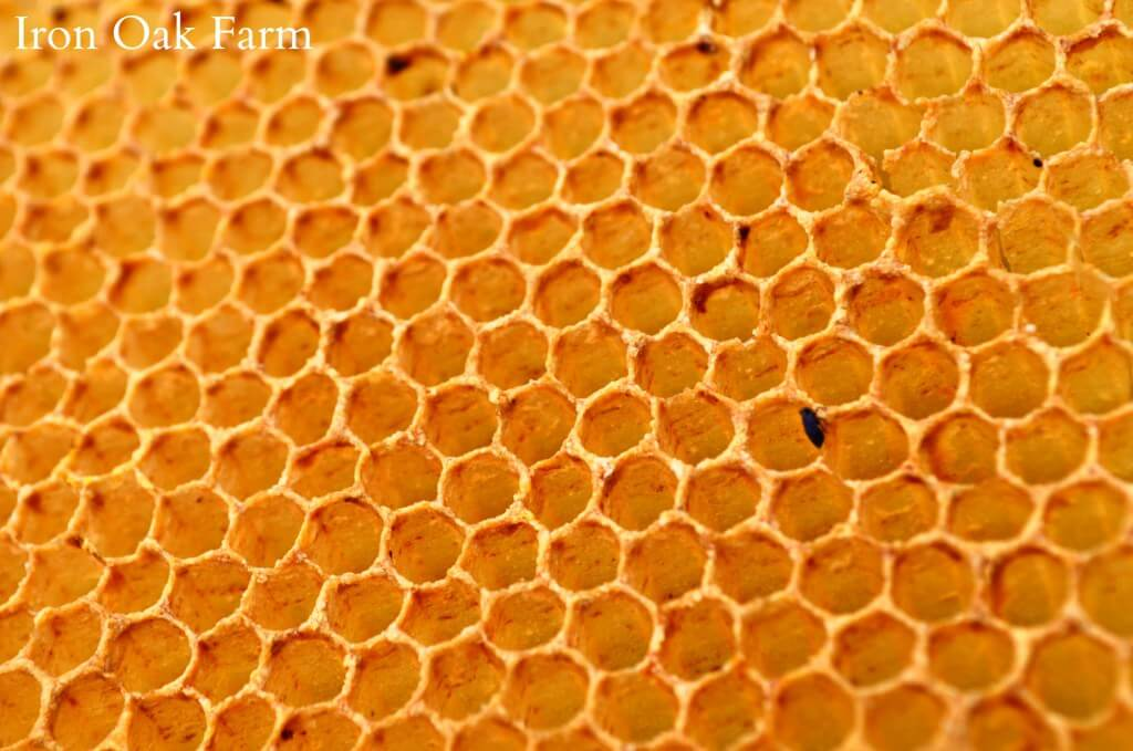 how do bees make honeycombs 4 (1)