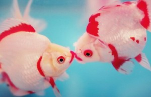 how do fish have sex feat good (1) (1)