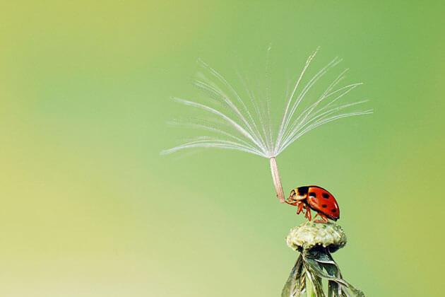images of ladybugs 1 (1)