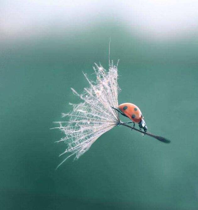 images of ladybeetles 12 (1)