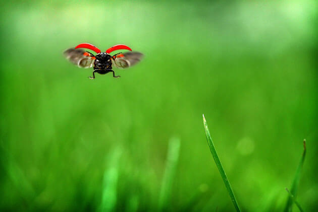 images of ladybeetles 13 (1)