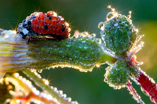 pictures of ladybugs 15 (1)