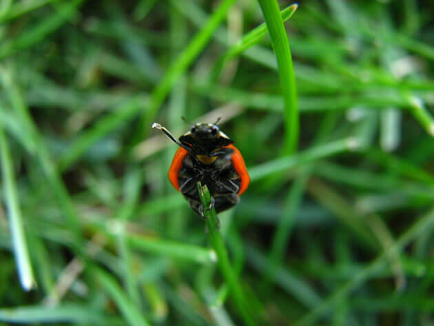 pics of ladybugs 6 (1)