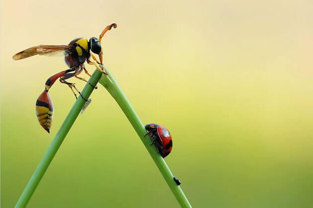 pics of ladybugs 8 (1)