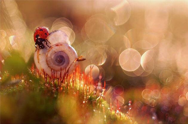 images of ladybeetles 9 (1)