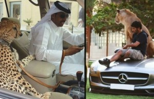 only in dubai feat (1)