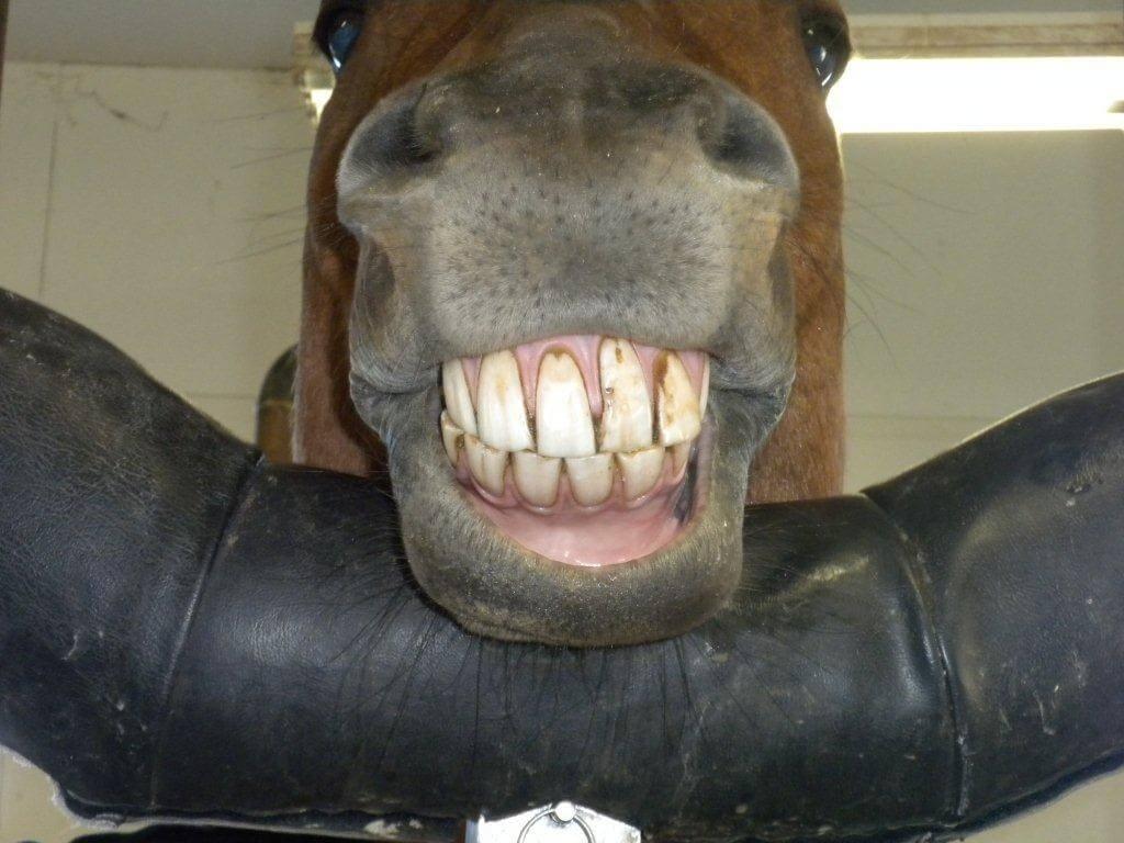 horses smiling pics 11 (1)