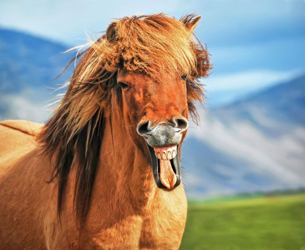 horses smiling pics 12 (1)
