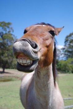 horses smiling pics 13 (1)