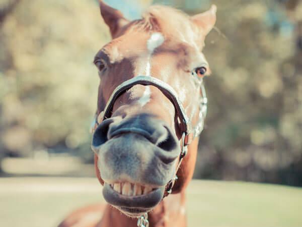 horses smiling pics 14 (1)